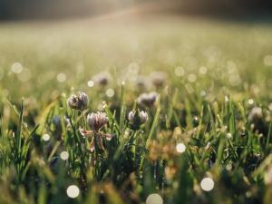 grass and little flowers AAron Burden